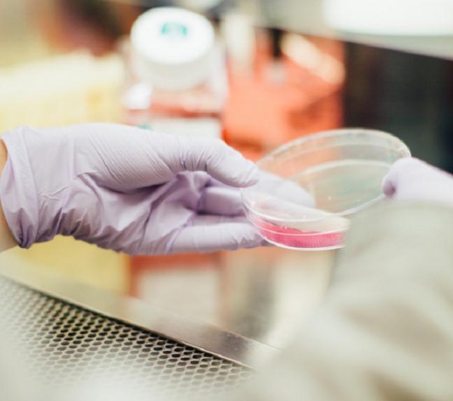 Kobieca dłoń w laboratorium